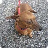 Adopt A Pet :: Barley - TN - Jacobus, PA