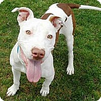Adopt A Pet :: Jake SUPER URGENT!! - Sacramento, CA