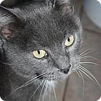 Adopt A Pet :: Kit-Kat - Stilwell, OK