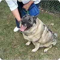 Adopt A Pet :: Tonka - Belleville, MI