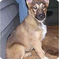Adopt A Pet :: Nadia - Chandler, IN