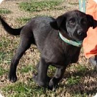 Adopt A Pet :: Sugar Pie - Staunton, VA