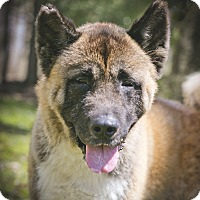 Adopt A Pet :: Roman - Toms River, NJ