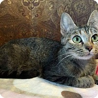 Adopt A Pet :: Queen Snazzypants - Edmond, OK