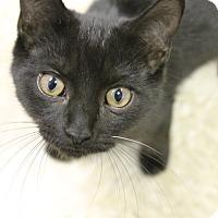Adopt A Pet :: Jacob - Medina, OH