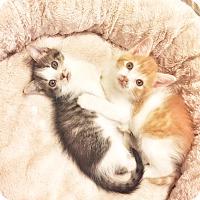Adopt A Pet :: Randi - Xenia, OH