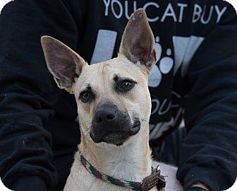 Shepherd (Unknown Type) Mix Dog for adoption in Daleville, Alabama - Bella
