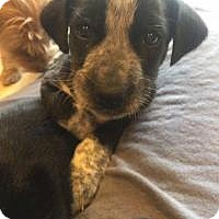 Adopt A Pet :: Tucker - Marlton, NJ
