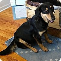 Adopt A Pet :: Mandee - North Brunswick, NJ