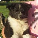 Adopt A Pet :: Indra