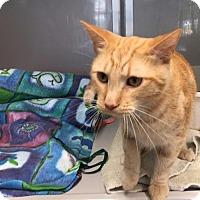 Adopt A Pet :: Oscar - St. Charles, MO