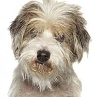 Adopt A Pet :: Cole - oakland park, FL