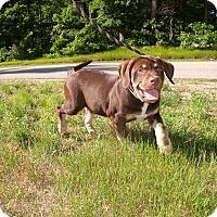 Adopt A Pet :: TuFF - LAKEVILLE, MA