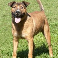 Adopt A Pet :: Fuller *Graduate* - Glen Allen, VA