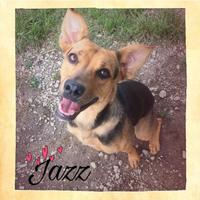 Adopt A Pet :: Jazz - Chattanooga, TN