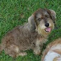 Adopt A Pet :: Hercules - Gainesville, FL