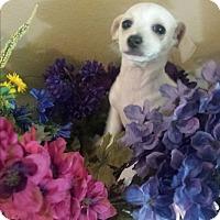 Adopt A Pet :: melody - Sacramento, CA