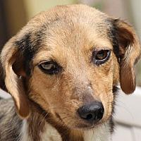 Adopt A Pet :: Fauna - Locust Fork, AL