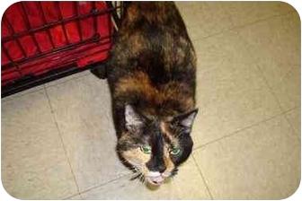 Calico Cat for adoption in Baton Rouge, Louisiana - stella