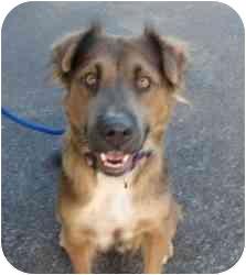 German Shepherd Dog Mix Dog for adoption in Kingwood, Texas - Sunny