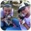 Photo 2 - Chihuahua/Shih Tzu Mix Dog for adoption in Katy, Texas - Darcey