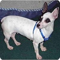 Adopt A Pet :: Lucy Low Rider - Suffolk, VA