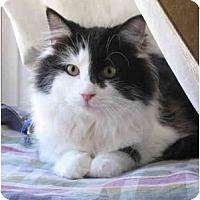 Adopt A Pet :: Darcy - Cincinnati, OH