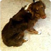 Adopt A Pet :: Willow - Mesquite, TX