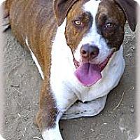 Adopt A Pet :: Roscoe  handsome boy - Sacramento, CA