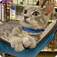 Adopt A Pet :: Maserati - The Colony, TX