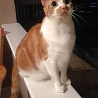 Adopt A Pet :: Hanna - Atco, NJ