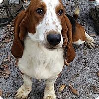 Adopt A Pet :: Cletus - Gainesville, FL