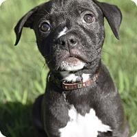 Adopt A Pet :: Luigi - Knoxville, TN