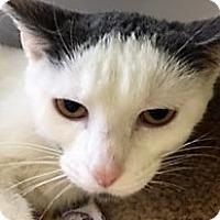 Adopt A Pet :: Sophia - Medina, OH