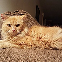Adopt A Pet :: HONEY - E. Claridon, OH