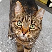 Adopt A Pet :: Ferrelle - Michigan City, IN