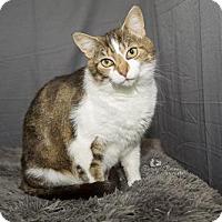 Adopt A Pet :: Stella - Waynesboro, PA