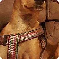 Adopt A Pet :: Starla (ETAA) - Washington, DC
