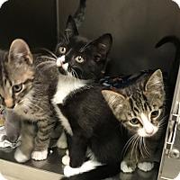Adopt A Pet :: Maxine, Carl, Humphrey, Crusty - Newport, NC