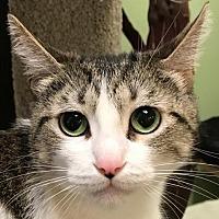Adopt A Pet :: Emily - Auburn, CA