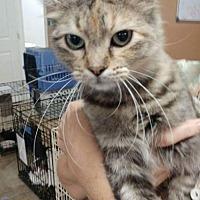 Adopt A Pet :: Addison - Trenton, MO