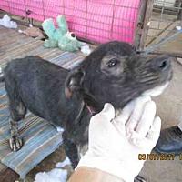 Adopt A Pet :: A292666 - Conroe, TX