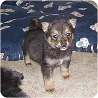 Adopt A Pet :: Bambi - Evansville, IN