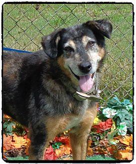 Australian Shepherd Mix Dog for adoption in Marietta, Georgia - SHERLOCK - shelter favorite