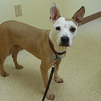 Adopt A Pet :: Lucy - Oberlin, OH