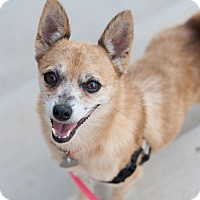 Adopt A Pet :: Rue - Knoxville, TN