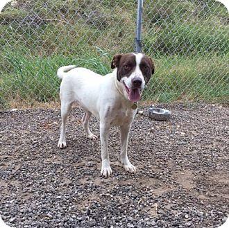 Collie Mix Dog for adoption in Bandera, Texas - Sammy