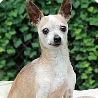 Adopt A Pet :: Taco - Port Washington, NY
