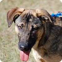 Adopt A Pet :: Gator AD 03-18-17 - Preston, CT