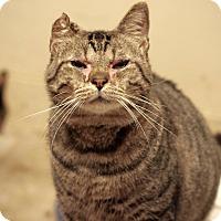Adopt A Pet :: Obie - San Antonio, TX